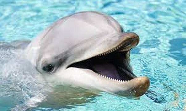 Swim with a dolphin - Bucket List Ideas