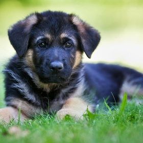 Adopt a Puppy - Bucket List Ideas