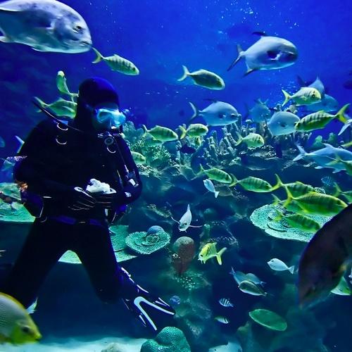 Learn to scuba dive - Bucket List Ideas