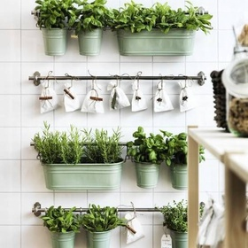Have a herbs bar in my kitchen - Bucket List Ideas