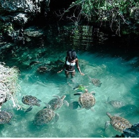 Swim with Turtles in Zanzibar, Tanzania - Bucket List Ideas
