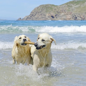 Take my dogs to the beach - Bucket List Ideas