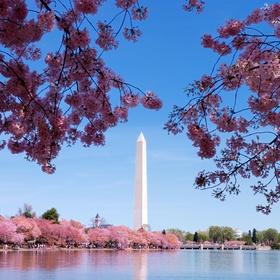Attend the Cherry Blossom Festival in Washington - Bucket List Ideas