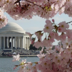 Attend the National Cherry Blossom Festival in Washington, D.C - Bucket List Ideas