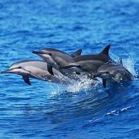 Spot dolphins in the wild - Bucket List Ideas