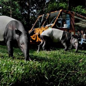 Go on a night safari in Singapore - Bucket List Ideas