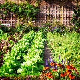 Start a Garden - Bucket List Ideas