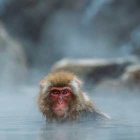 Visit Jigokudani (monkey park) in Japan - Bucket List Ideas