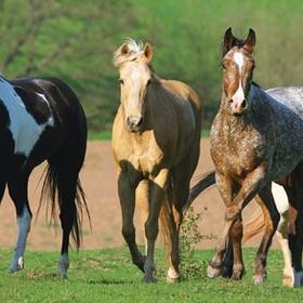 Own horses - Bucket List Ideas