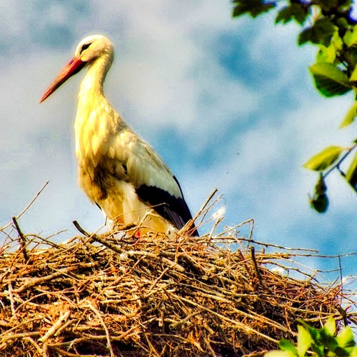 Photograph Storks in Rossum-Hurwenen, Netherlands - Bucket List Ideas