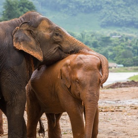Visit Elephant Nature Park in Chiang Mai, Thailand - Bucket List Ideas