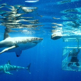 Cage Dive - Bucket List Ideas