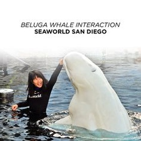 Do an Beluga-interaction program - Bucket List Ideas