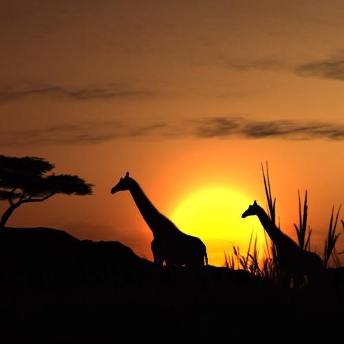 Visit Africa - Bucket List Ideas