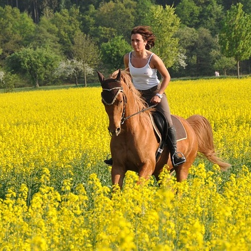 Learn to horse ride - Bucket List Ideas