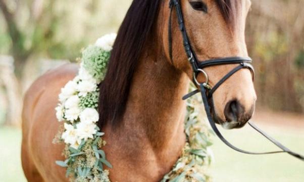 Own a Horse - Bucket List Ideas