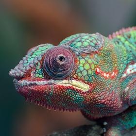 Keep an exotic pet - Bucket List Ideas