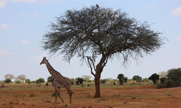 Go on an African Safari - Bucket List Ideas