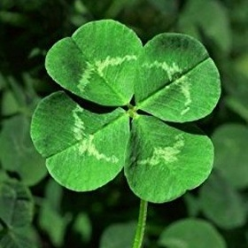Find a 4 leaf clover - Bucket List Ideas