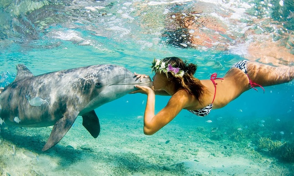 Kiss a Dolphin - Bucket List Ideas