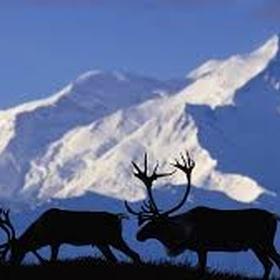 Go to Alaska! - Bucket List Ideas