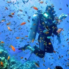 Go scubadiving in Hawaii - Bucket List Ideas