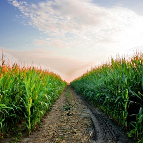 Run through a corn field - Bucket List Ideas