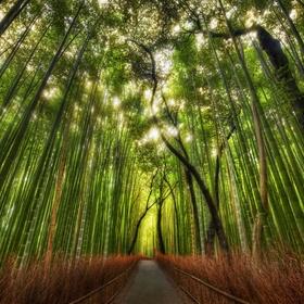 Visit Japan's bamboo forest - Bucket List Ideas