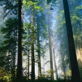 Visit the Redwood Forest - Bucket List Ideas