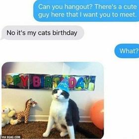 Celebrate every birthday of my cat - Bucket List Ideas