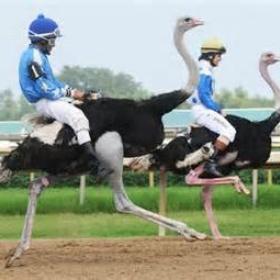 Ride an ostrich - Bucket List Ideas