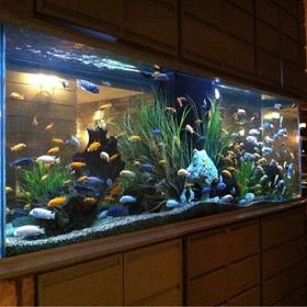 Having a beautiful aquarium full of fish - Bucket List Ideas