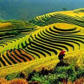 See the rice fields in Vietnam - Bucket List Ideas
