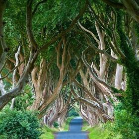 Visit The Dark Hedges, Northern Ireland - Bucket List Ideas