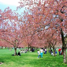 Stroll through the Brooklyn Botanic Garden - Bucket List Ideas