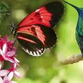 Go to Butterfly World - Bucket List Ideas