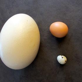 Eat an ostrich egg - Bucket List Ideas