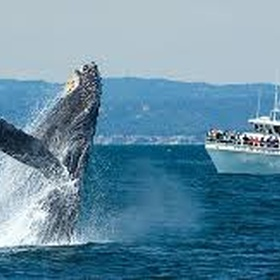 Go on a whale watching tour - Bucket List Ideas