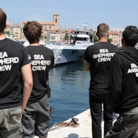 Become a crew member on a sea shepherd conservation society ship - Bucket List Ideas