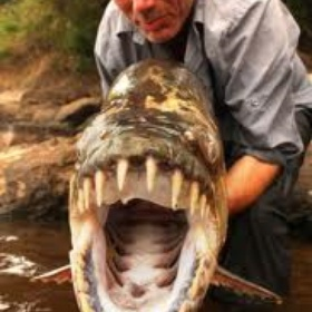 Catch a Goliath Tiger Fish - Bucket List Ideas