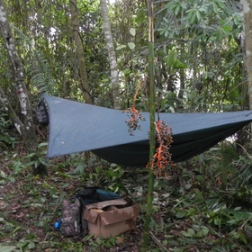 Awake In A Tropical Rainforest - Bucket List Ideas