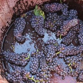 Crush Grapes With My Feet at a Vineyard - Bucket List Ideas