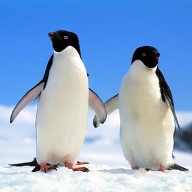 Meet A Penguin - Bucket List Ideas
