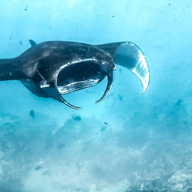 Spot a manta ray during a dive | Nusa Lembongan | Bali | Indonesia - Bucket List Ideas