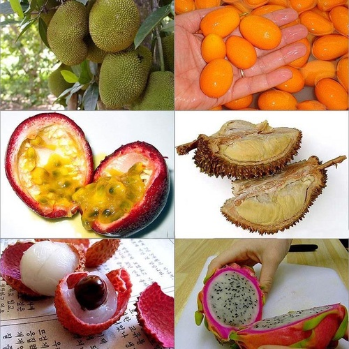 """Try All of the """"10 Must-Try Exotic Fruits"""" - Bucket List Ideas"""