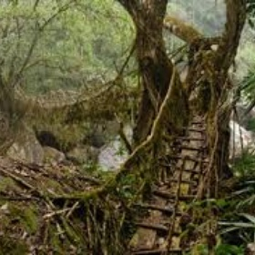 Cross a Live root Bridge in India - Bucket List Ideas
