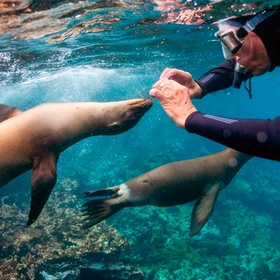 Swim with Sea Lion, Galapagos Island - Bucket List Ideas