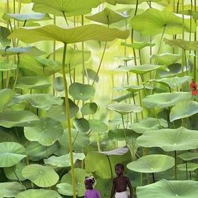 Walk in the Fern Forest in Jamacia - Bucket List Ideas