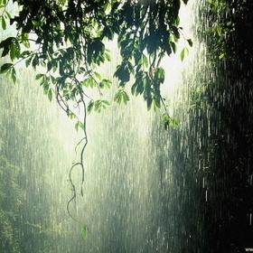 Spend the night in a rainforest - Bucket List Ideas
