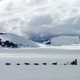 Go on a dog sledding expedition in Iceland - Bucket List Ideas